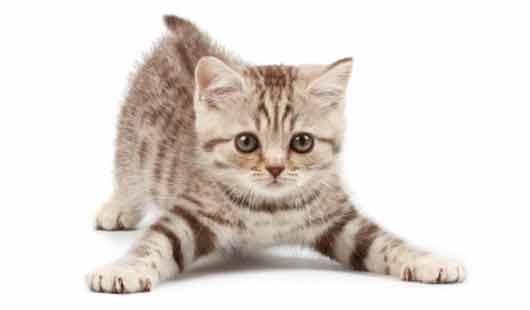 Ungewöhnliches Verhalten einer Katze ist mit Katzenpsychologie erklärbar