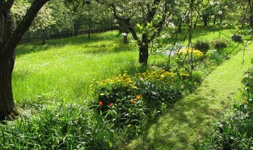 Gepflegter Rasen - Foto Clipdealer