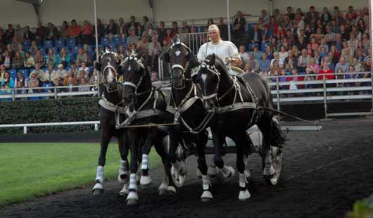 Römerwagen auf der Celler Hengstparade 2014