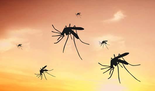 Zika-Virus in Osnabrück - alle Infos
