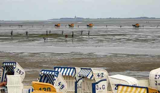 Von Cuxhaven per Kutschfahrt durch das Wattenmeer nach Neuwerk