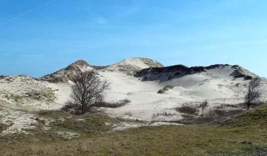 Norderney - wilde Dünen auf der Ostfriesischen Insel