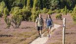 Wandern auf dem Heidschnuckenweg - Foto: Lüneburger Heide GmbH