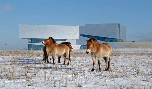 Forschungsmuseum Schöningen - das Gebäude mit den Pferden