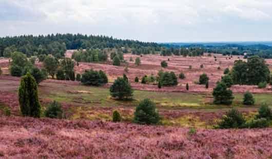 Lüneburger Heide - Heidelandschaft