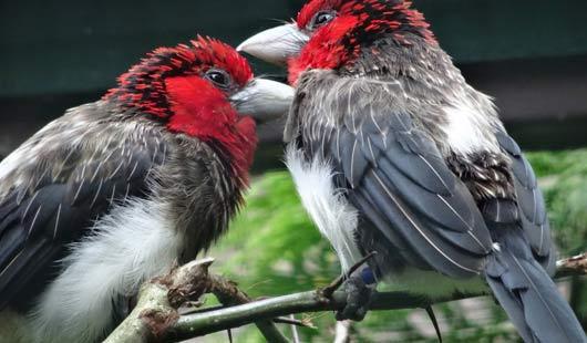 Vögel im Weltvogelpark Walsrode
