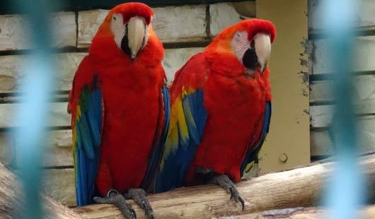 Aras im Weltvogelpark Walsrode