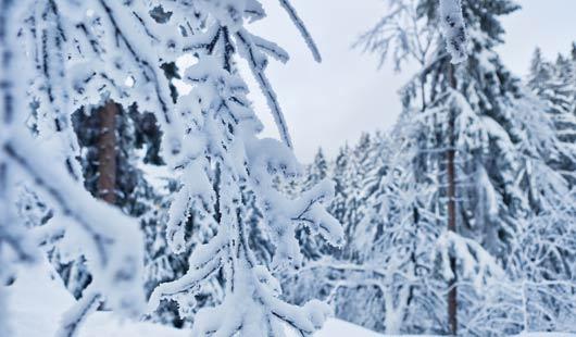 Winterurlaub im Harz - Erholung im Schnee