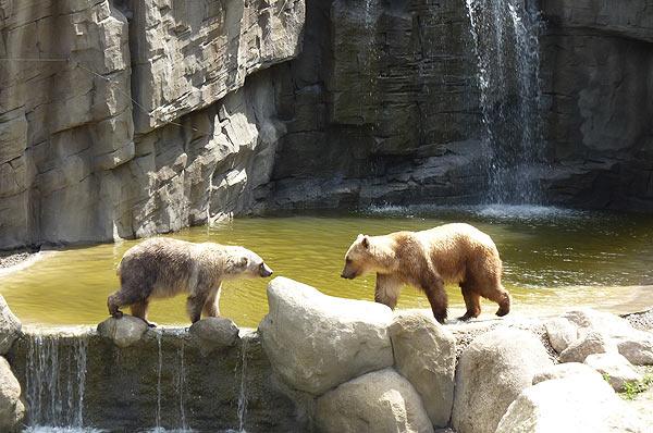 Bären im Zoo Osnabrück