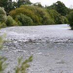 Fluss Aller in der Heide