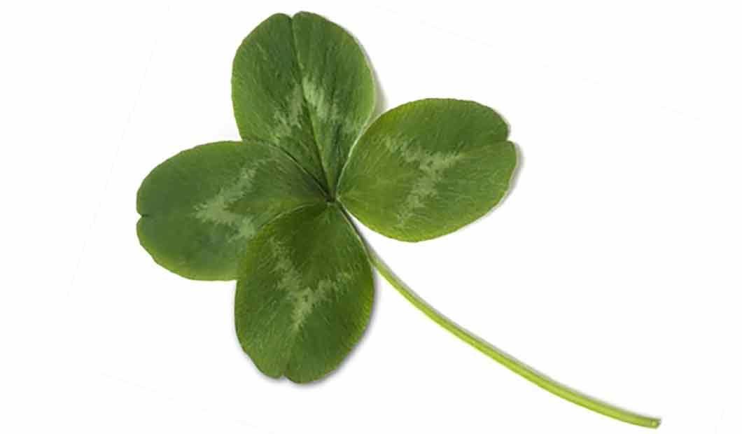 Vierblättriges Kleeblatt als Glückssymbol
