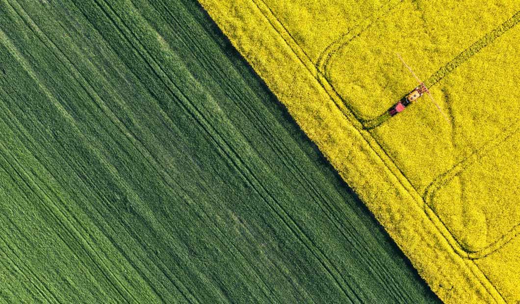 Landwirtschaft  - Raps-Feld von oben