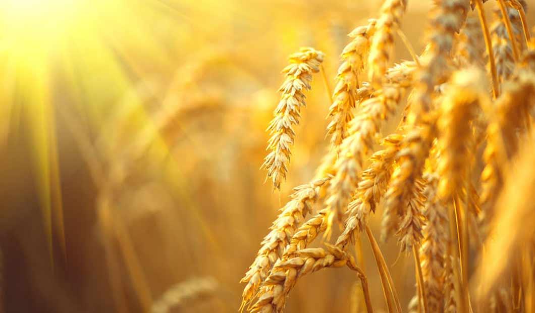 Landwirtschaft - Als Landwirt eine gute Ernte einfahren