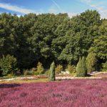 Urlaub in der wunderschönen Heide von Niedersachsen