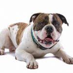 Neues Hundegesetz kommt