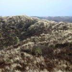 Dünen als Küstenschutz