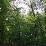 Niedersachsen Wälder & Forstwirtschaft