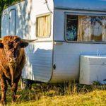 Camping auf dem Bauernhof - naturnah - Foto Clipdealer