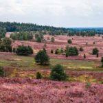 Wellnessurlaub in der Lüneburger Heide
