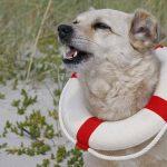 Urlaub mit Hund an der Nordsee